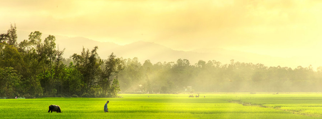 Sri-Lanka-Rice-Fields